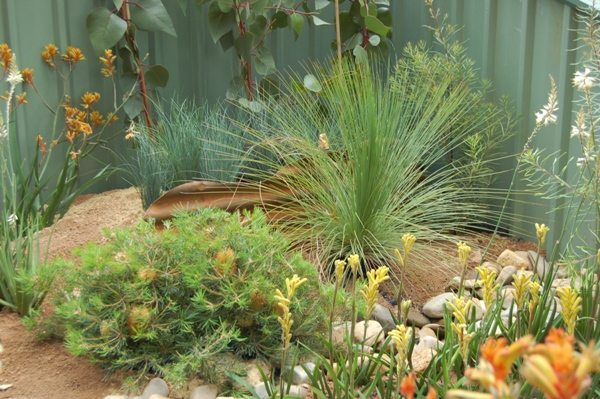 Amazing Australian Native Garden Designs - This corner of corrugated iron fence is made attractive with vines, waif-y grass and fuchsias, Australian Outdoor Living.