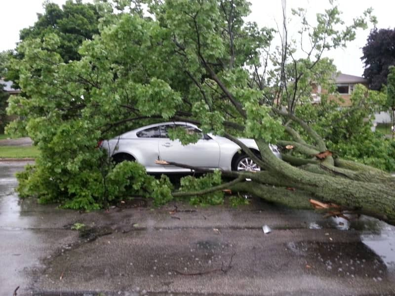 Blasé about the weather? This is what happens when you don't protect your car - Protect your car from potential falling trees, Australian Outdoor Living.