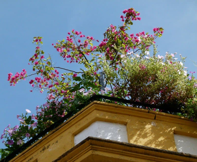 How to Build a Perfect Rooftop Garden - Decide on Design, Australian Outdoor Living.