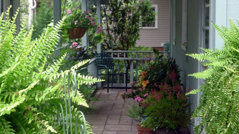 The 9 Best Potted Plants to Decorate Your Pergola - Ferns and plants, Australian Outdoor Living.