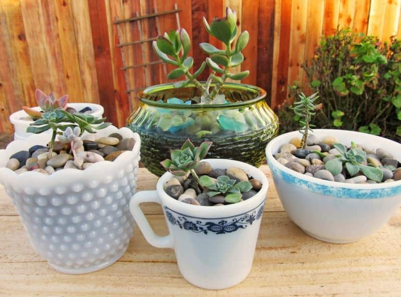 The 9 Best Potted Plants to Decorate Your Pergola - Succulents, Australian Outdoor Living.