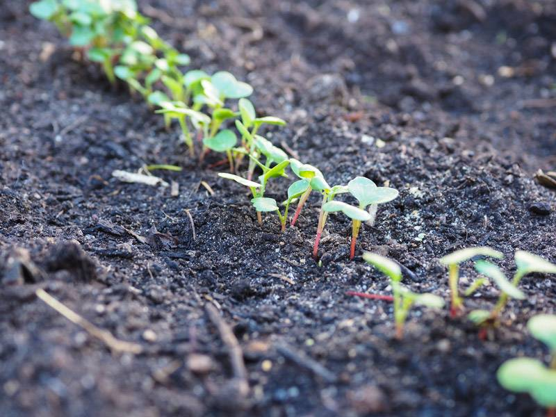Six valuable tips for eco-friendly outdoor design - Use Compost for a Eco-friendly Garden Design, Australian Outdoor Living.