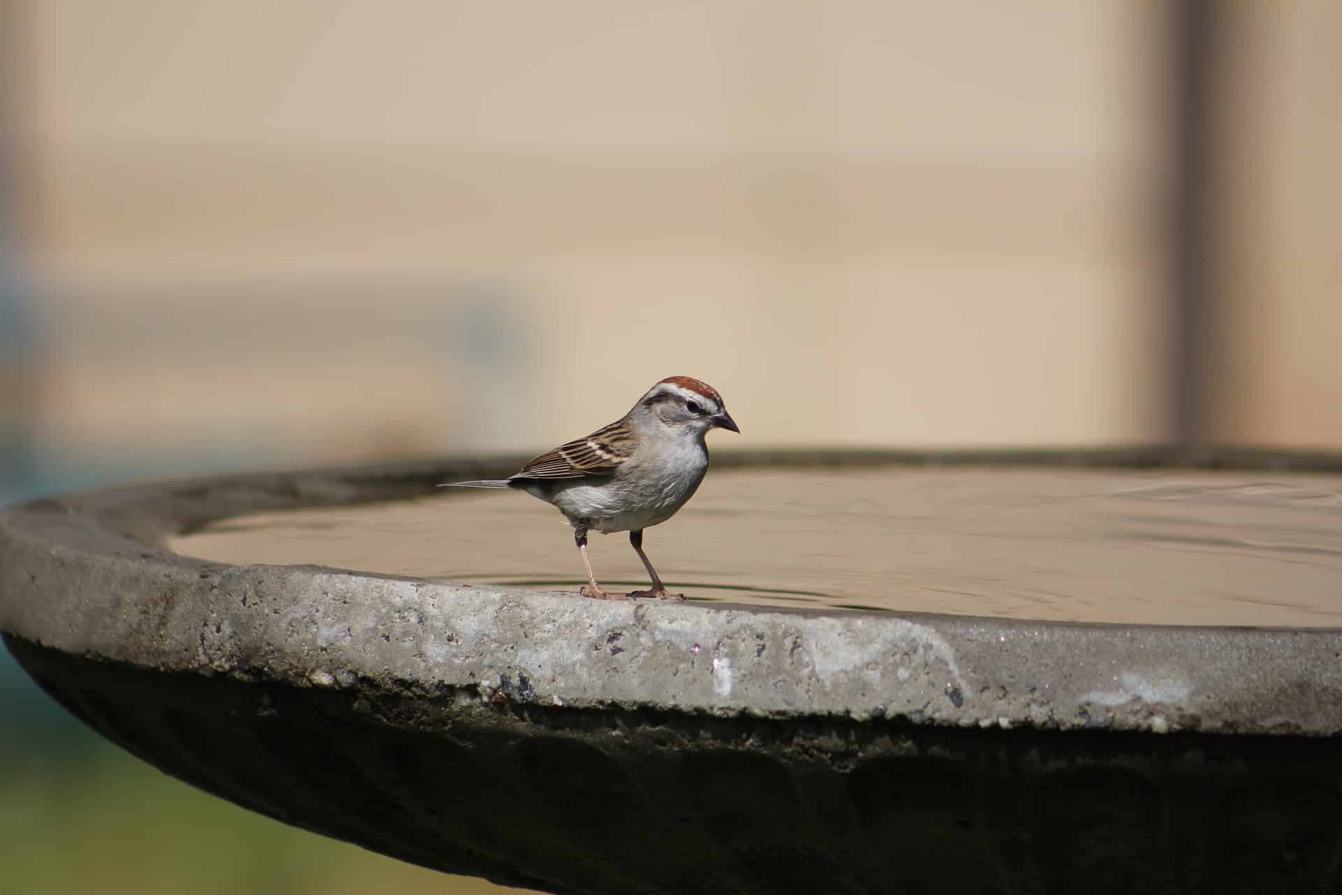 How to help your backyard wildlife during a heat wave - Place some makeshift birdbaths around your yard, Australian Outdoor Living.