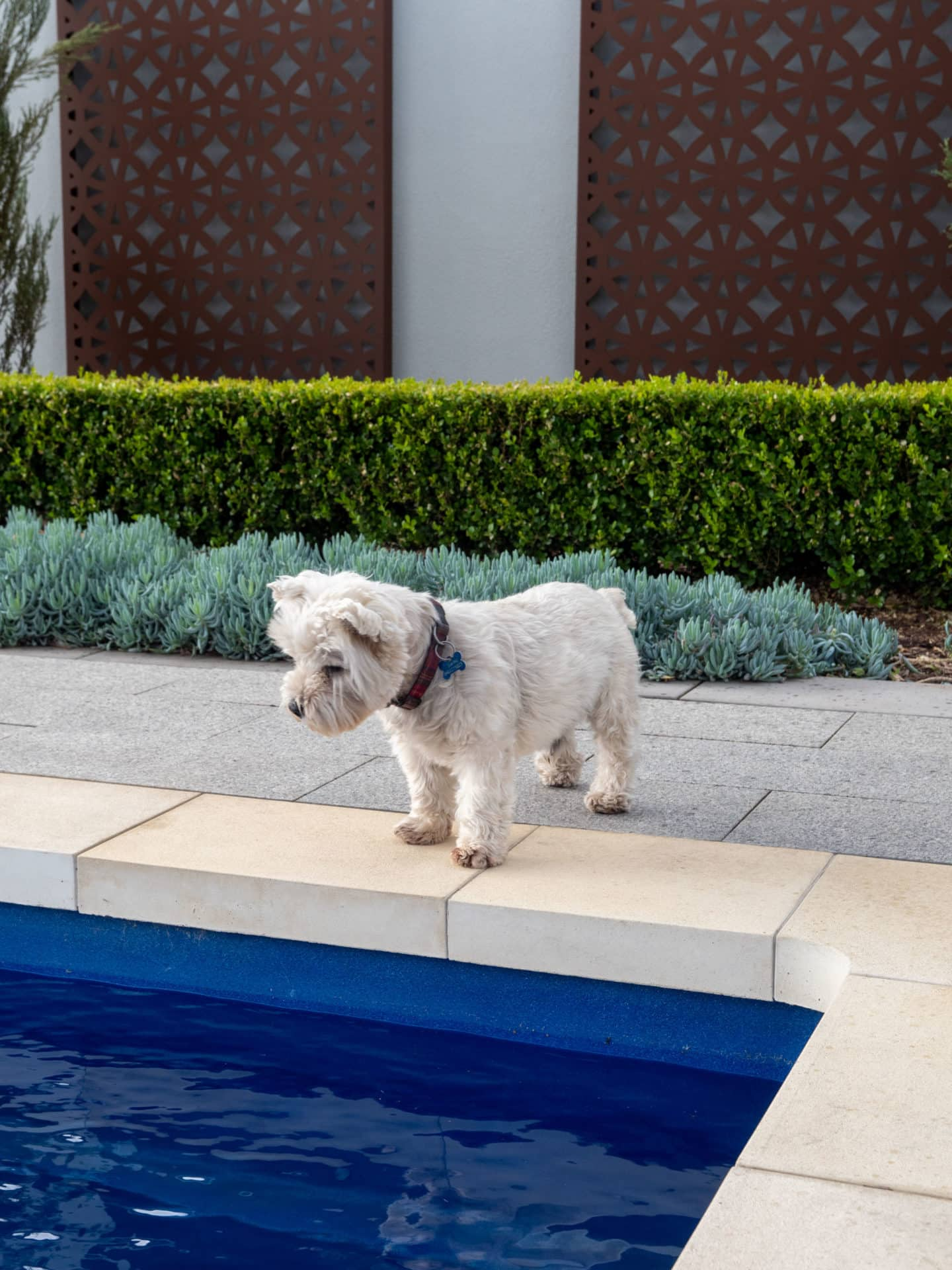Backyard Inspiration - Building a home for your pampered pet   Australian Outdoor Living