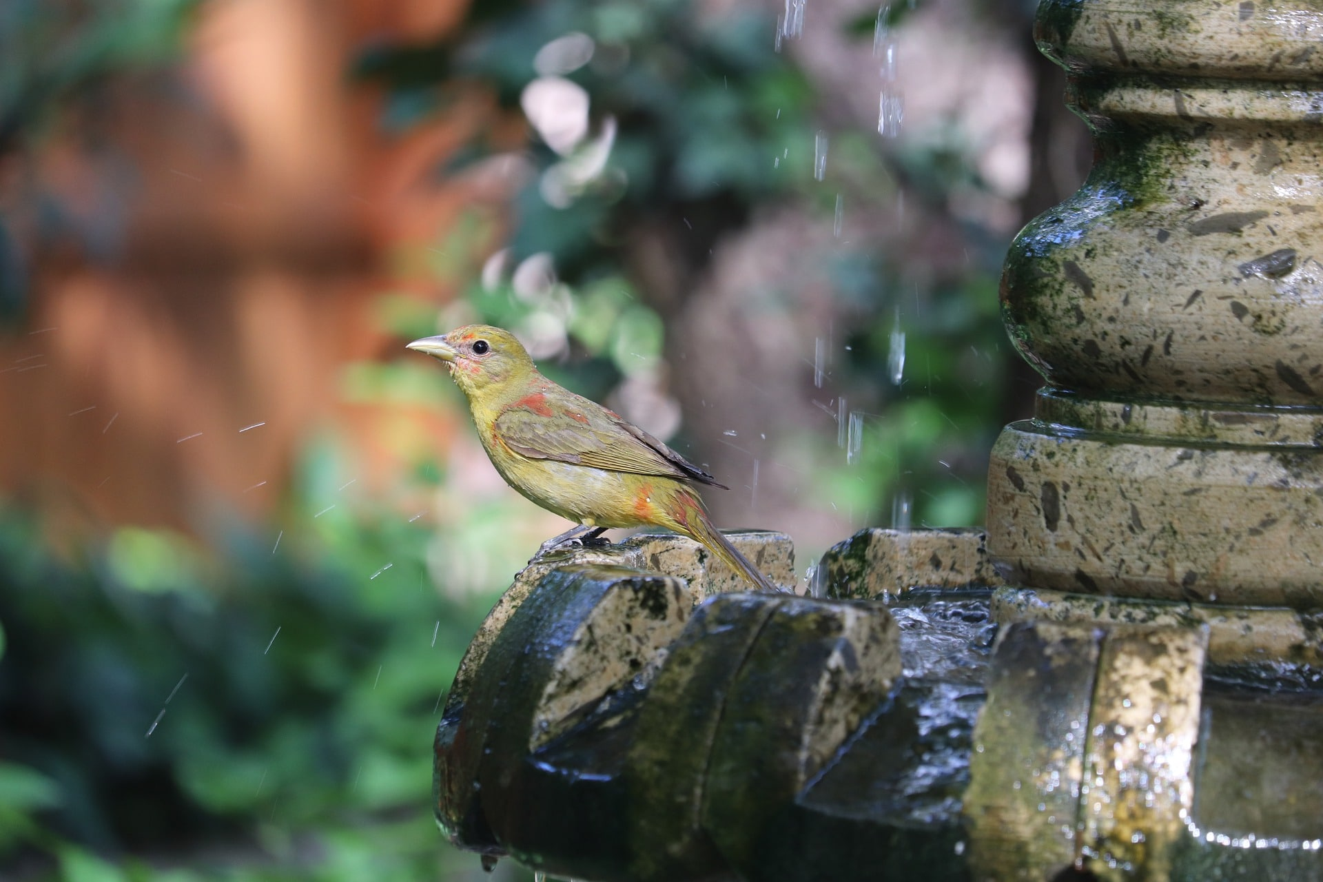 Install a water feature in your small backyard.